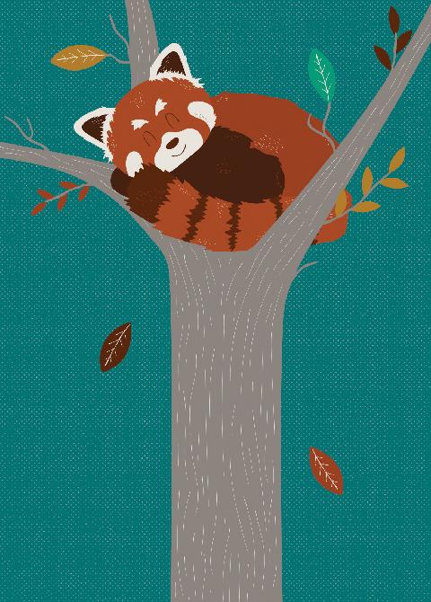 illustratie-ginger-animals-red-panda